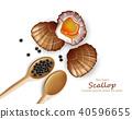 Scallop Vector realistic seafood. Fresh shellfish 40596655