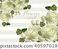 roses flower vector 40597019