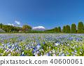 후지산, 하나노미야코 공원, 네모필라 40600061