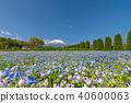 후지산 (5 월 꽃의 도시 공원 맑은 네모 피라) 40600063