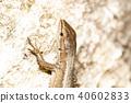 파충류, 도마뱀, 동물 40602833