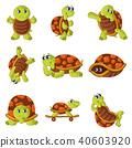 happy turtle set 40603920