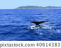 고래, 혹등고래, 흑고래 40614383