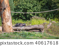 A chimpanzee lies on a wooden scaffolding 40617618