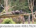 Two chimpanzees on a wooden scaffold 40617624