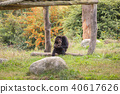 A chimpanzee is sitting in the meadow 40617626