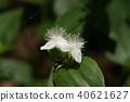 植物 植物学 植物的 40621627