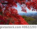 枫树 枫叶 红枫 40622203