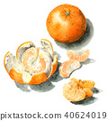 mandarin orange, natsumikan, summer tangerine 40624019