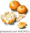 mandarin orange, natsumikan, summer tangerine 40624021