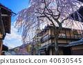 産寧坂의 벚꽃 40630545