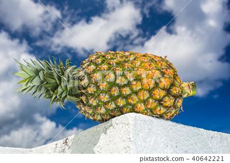 菠蘿 40642221