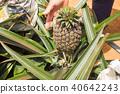 菠蘿領域 40642243