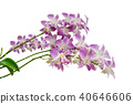 Purple orchid flowers branch isolated 40646606