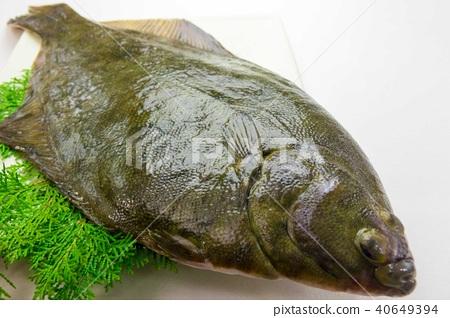 Fish 40649394