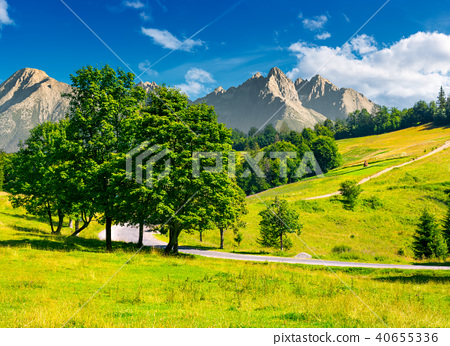 trees by the road in High Tatra mountains 40655336