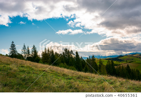 forested grassy hills on a cloudy day 40655361
