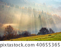 fog, forest, meadow 40655365