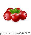 蔓越莓 蔓越橘 紅色 40660005
