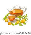 杏 杏子 向量 40660478