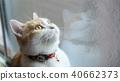 창문을 바라 보는 고양이 40662373