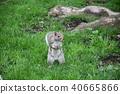동물, 다람쥐, 작은 동물 40665866