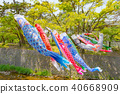 A carp streamer swimming in Mukawa river 40668909