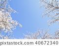아다치 구 東綾瀬 공원 푸른 하늘과 벚꽃 40672340