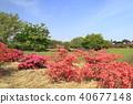 Tatebayashi City Azalea Oka Park外太空杜鵑花信息委員會 40677148