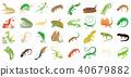 lizard, icon, set 40679882