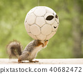 red squirrel is standing in an football 40682472