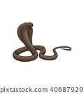 cobra, snake, vector 40687920