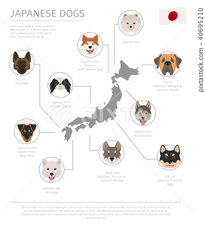 Dogs by country of origin. Japanese dog breeds 40695210