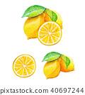 柠檬 水彩 水彩画 40697244