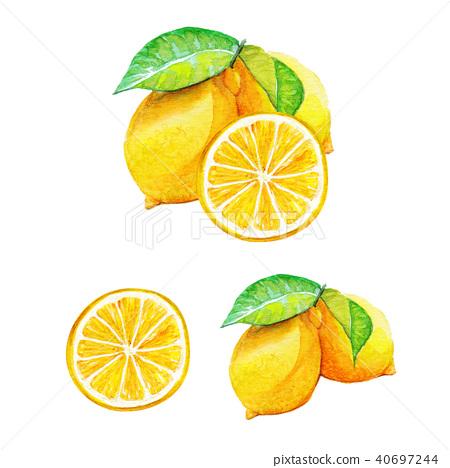 Lemon | Watercolor 40697244