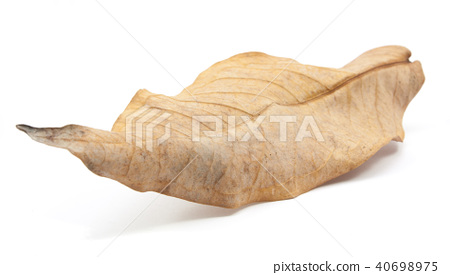 dry leaves isolated 40698975