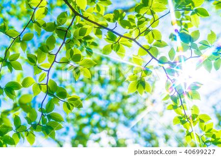 新鮮的綠色生態形象 40699227