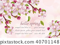 Cherry flowers Spring background Vector 40701148