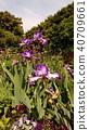 ดอกไม้,ท้องฟ้าเป็นสีฟ้า,แปลงดอกไม้ 40709661