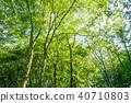 深林树 40710803