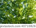 新鲜的绿树 40710826