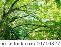 深林树 40710827