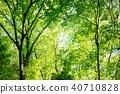 深林树 40710828