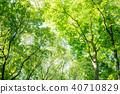 深林树 40710829