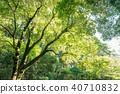 深林树 40710832
