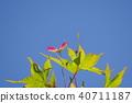 ธรรมชาติ,ทัศนียภาพ,ภูมิทัศน์ 40711187
