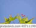 ธรรมชาติ,ทัศนียภาพ,ภูมิทัศน์ 40711190