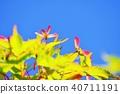 ธรรมชาติ,ทัศนียภาพ,ภูมิทัศน์ 40711191