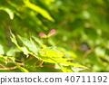 ธรรมชาติ,ทัศนียภาพ,ภูมิทัศน์ 40711192