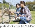 염소에게 먹이를주는 커플 40711457